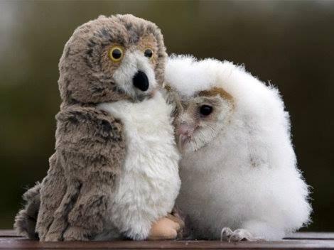 Babies cute chicks Fluffy owls - 7945870592