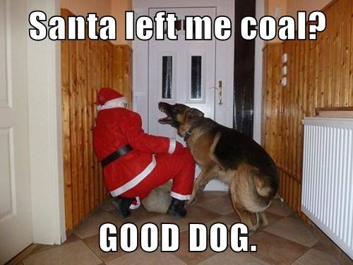 dogs,good dog,coal,funny,santa claus