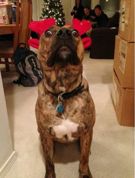 dogs christmas photobomb - 7946275328
