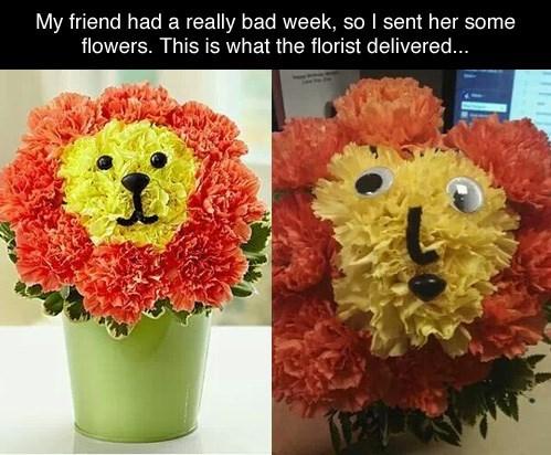 derp,flowers