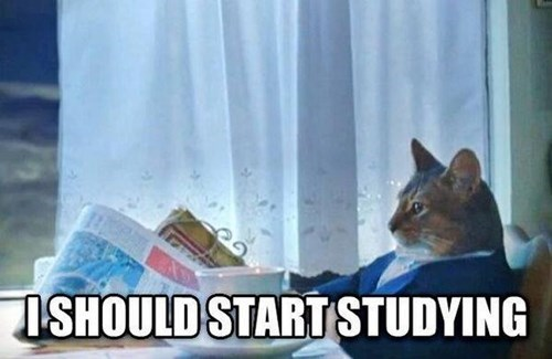 Squirrel - SHOULD START STUDYING