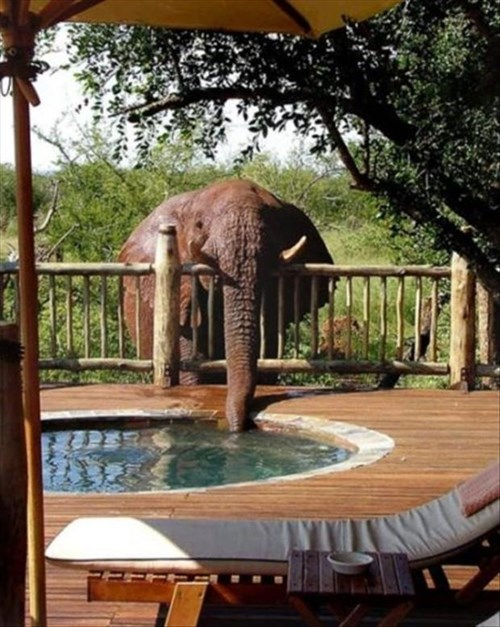 cute drink elephants funny sneaky pool