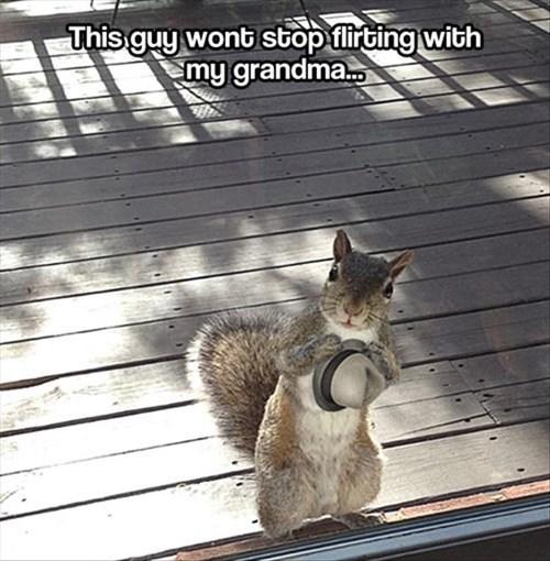 cute funny grandma flirt hats squirrels - 7946756352