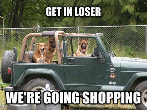 cars dogs funny shopping teens - 7946765056
