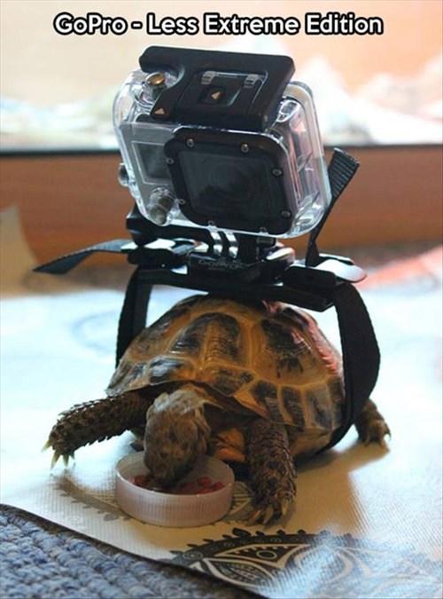 cameras funny GoPro turtles slow motion tortoise - 7946767872