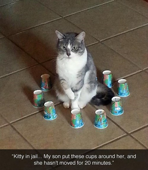 Cats cups funny jail SOON - 7946768896