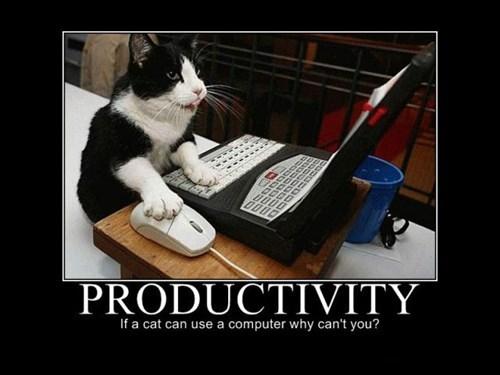 Cats funny productivity internet - 7946775296