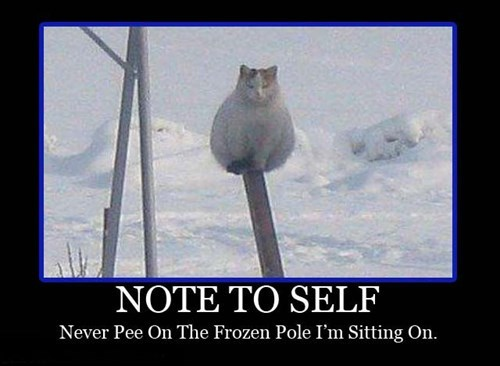 Cats frozen funny pee - 7946786048