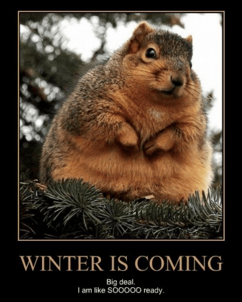 chipmunk funny wtf winter - 7946788864