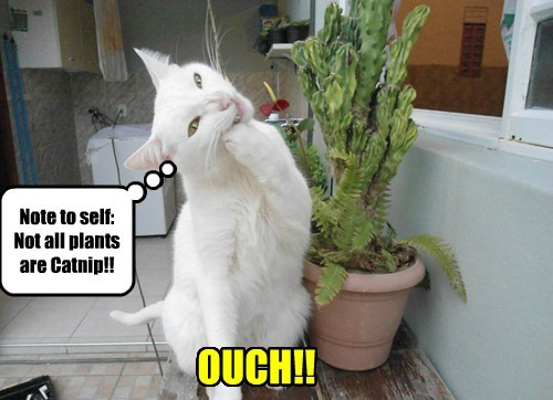 Note to self: Not all plants are Catnip!! OUCH!!