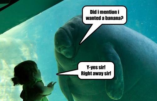 boss manatees banana - 7947981312