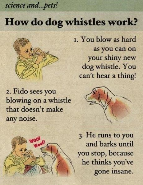 whistles dogs Fake Science funny - 7948284928
