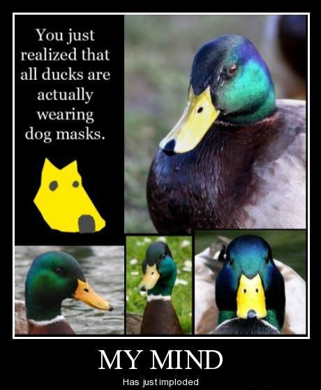 ducks,dogs,mind blown,funny,mask