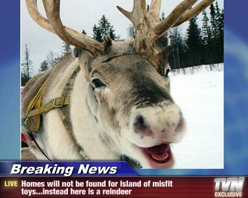 Breaking News christmas TV reindeer