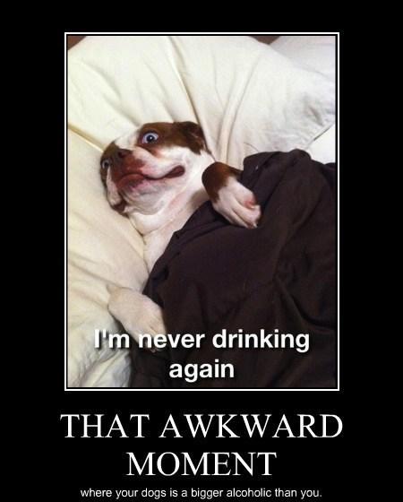 Awkward alcoholic dogs funny wtf - 7948697600