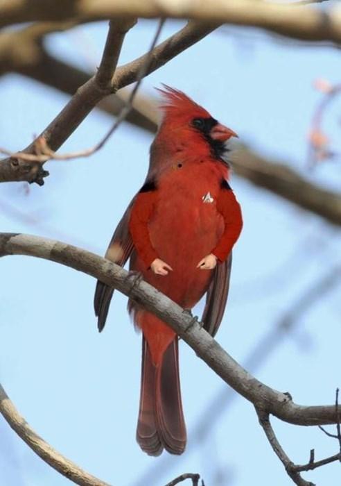 cardinal,birds,jean-luc picard,starfleet uniform