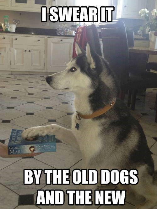 dogs,Game of Thrones,oath