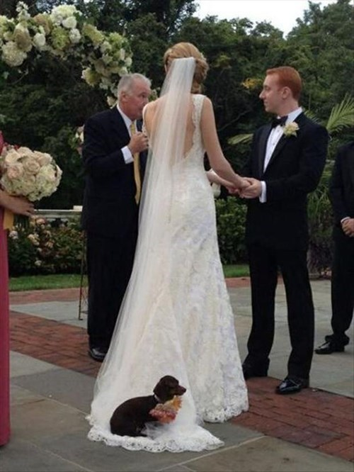dogs,funny,wedding