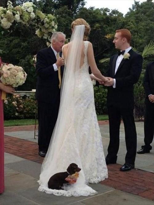 dogs funny wedding - 7948787712