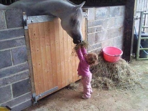Babies cute farm feed horses - 7948790528