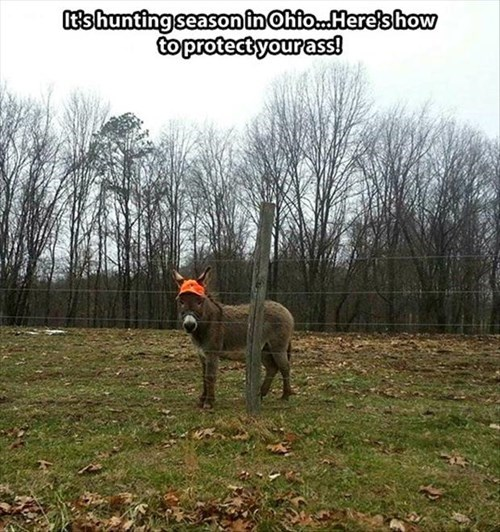 donkeys hunting funny puns - 7948799232