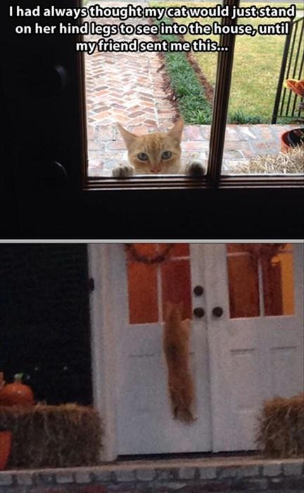 beg Cats funny hang peek - 7948814336