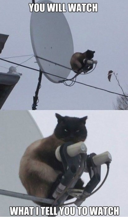 Cats,satellite,funny,televion
