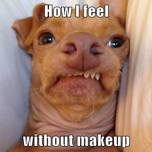 dogs funny makeup ugly - 7949663232