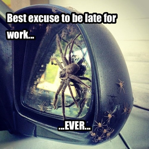 spiders excuse creepy
