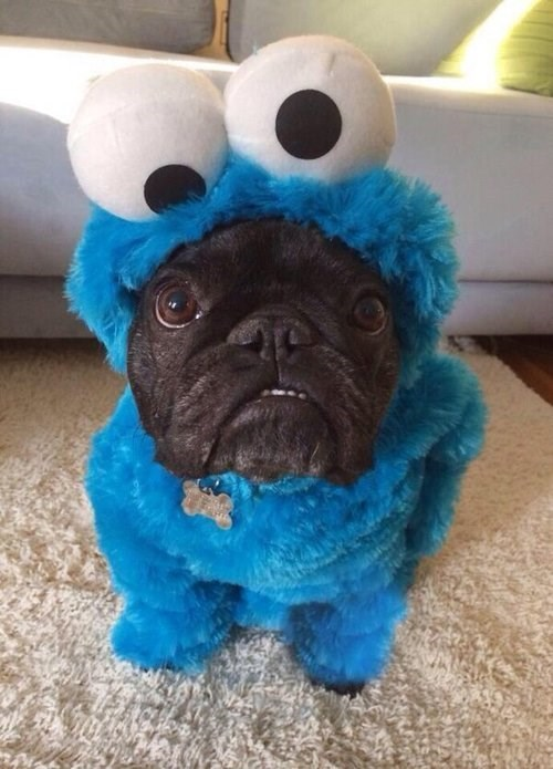 costume dogs Cookie Monster g rated poorly dressed