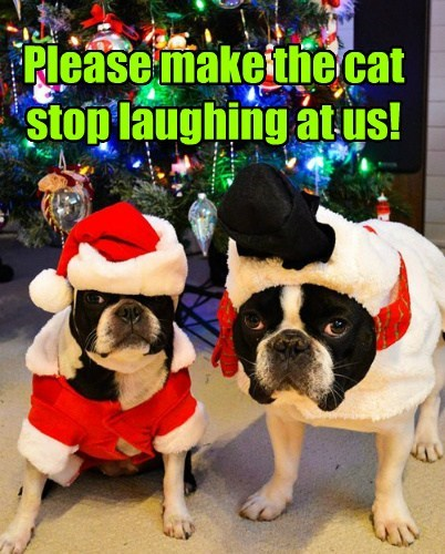 Cats costume dogs christmas funny - 7950139392