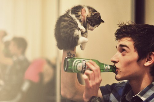 beer cat cute funny - 7950341888