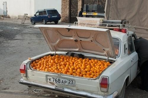 wtf trunks fruit - 7950559232