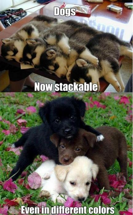 dogs puppies cute stack - 7950569472