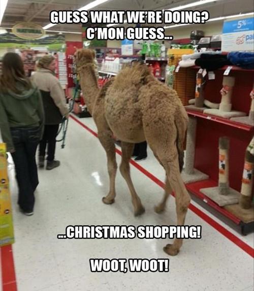 camels,funny,pets,pet store