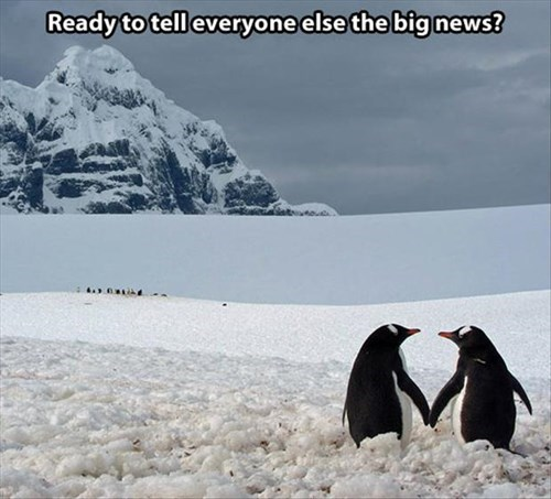 cute cold news penguins love - 7950585088