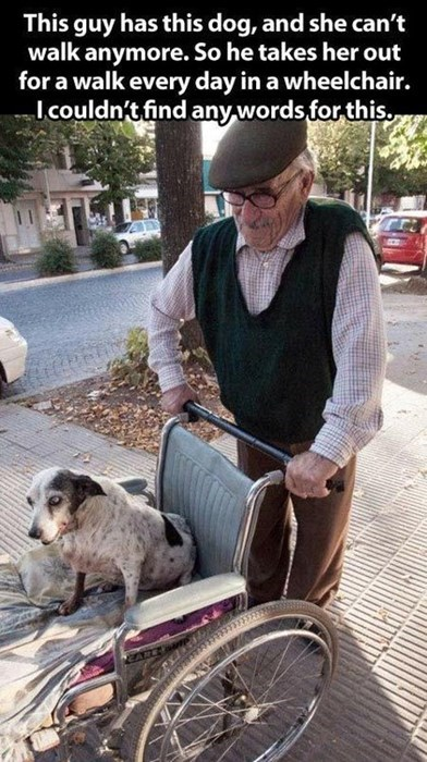 random act of kindness dogs pets g rated win - 7950728192