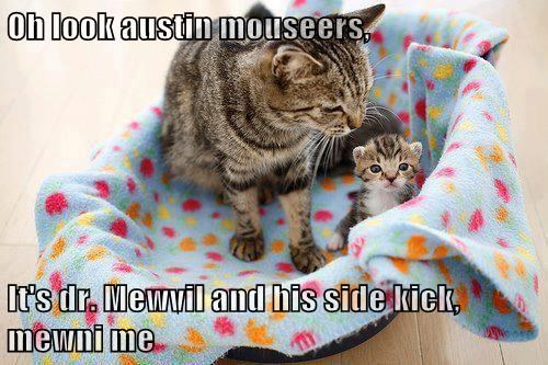 Cats cute austin powers funny kitten - 7951608064