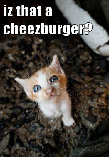 Cheezburger Image 7951705344