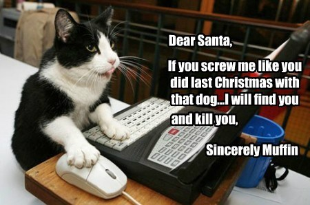 Cats christmas funny santa - 7951739648
