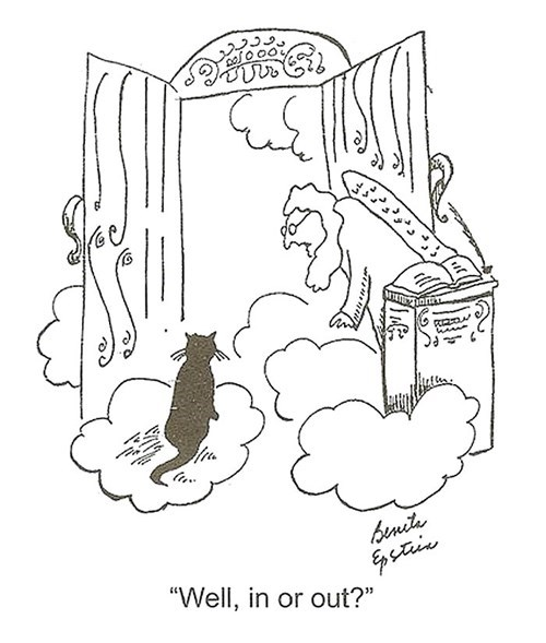 heaven Cats web comics - 7951787008