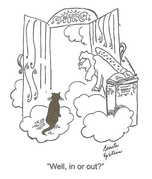 heaven Cats web comics - 7951787008