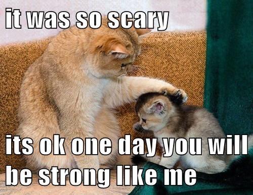 brave Cats comfort kitten mom - 7951880960
