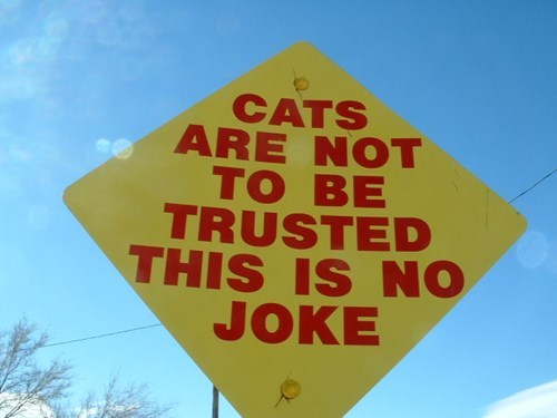Cats signs warning wtf - 7951969536