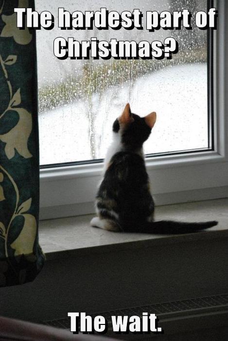 Cats christmas kitten wait santa - 7952168704