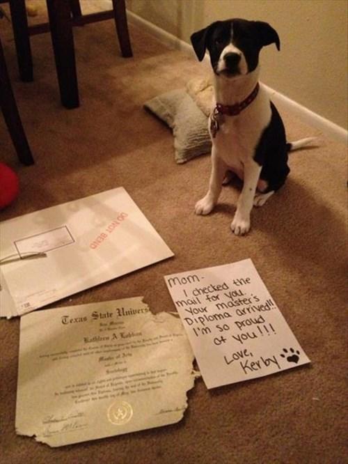 dogs diploma destroy shame masters - 7952205568