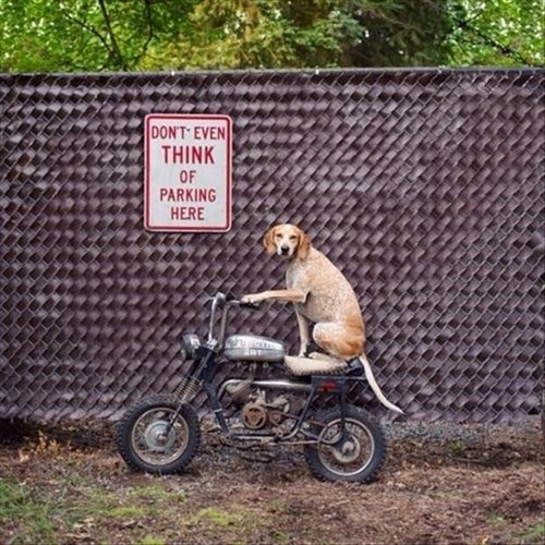 dogs,motorcycles,parking,signs