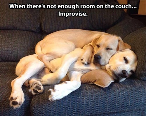 cute dogs friends snuggle