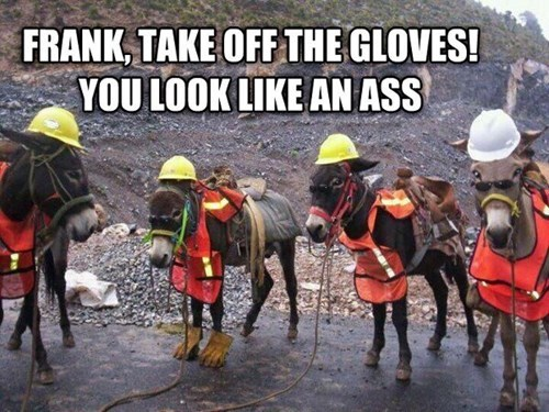 ass gloves donkeys puns - 7952236032