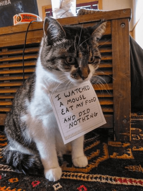 Cats FAIL mice shame - 7952248064